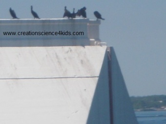 Cormorants off Mackinac Island