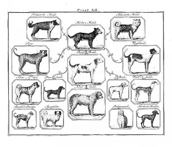 Animal-Dog-Buffon-Dog-Species-Diagram